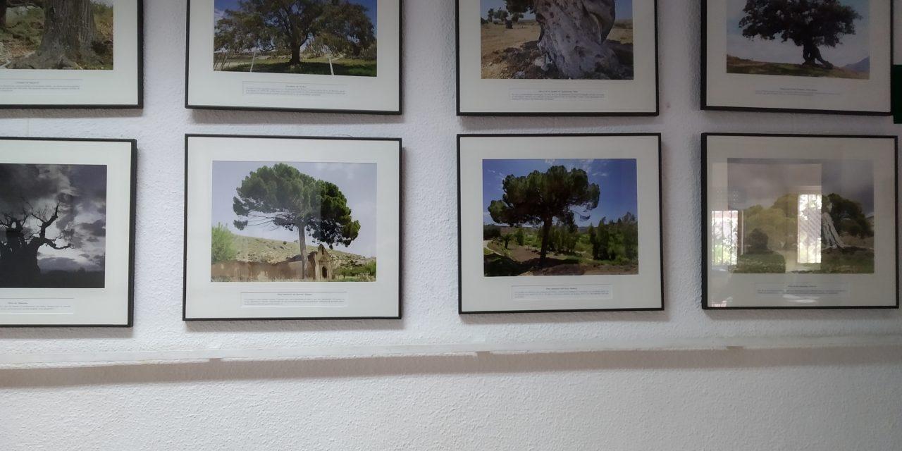 EXPOSICIÓN DE ÁRBOLES SINGULARES DE ALMERÍA